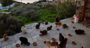 Esta es tu oportunidad para cuidar gatos en una isla y que te paguen