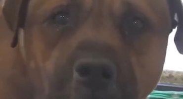Este perro llora al enterarse de que lo abandonaron y es desgarrador