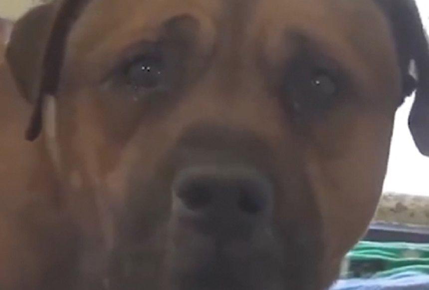 AJ, el pobre perro abandonado