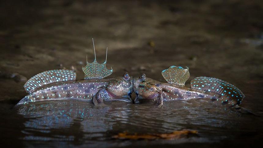 Fotografías que muestran el lado divertido de la vida salvaje