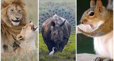 ¡Estas son las fotos más graciosas de la vida salvaje en el 2018!