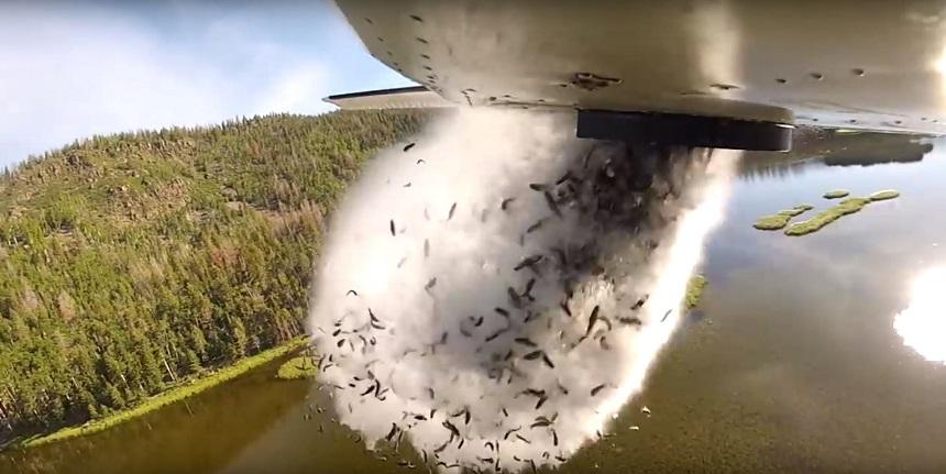 Aviones disparando peces en los lagos de Utah