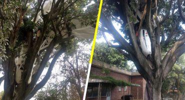 Cayó una avioneta sobre un árbol en Rancho Tetela, Cuernavaca