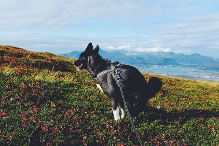 Calendario con perritos haciendo popó