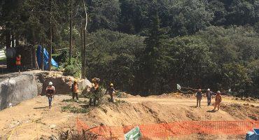 Aprueban tumbar 147 árboles para la construcción de varias torres lujosas