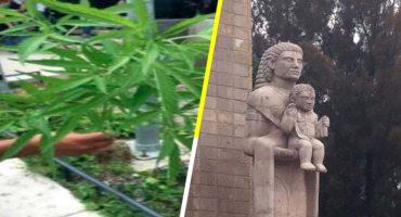 Encuentran plantas de marihuana en el Monumento a la Madre