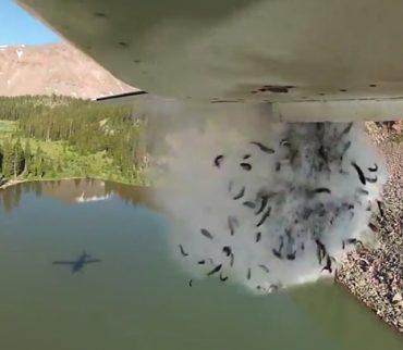 Lluvia de peces, así repueblan lo ríos de Utah