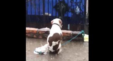 Sin palabras: Graban a un perro recibiendo granizada en una azotea