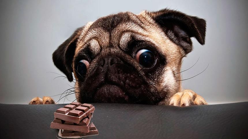 Los diez errores más comunes que cometes con tu perro sin darte cuenta