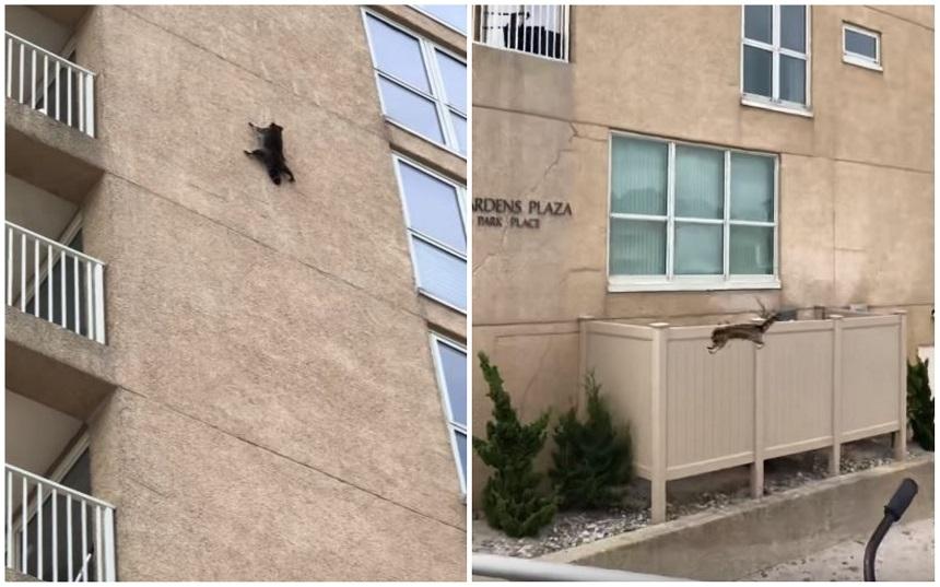 El mapache que saltó de un noveno piso