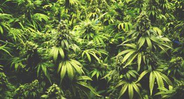 El camino a la legalización