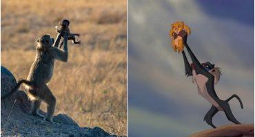 Mágico Mundo Animal: La versión real de una escena del Rey León