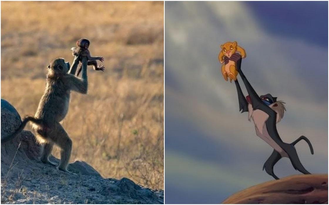Animales recreando escena de El Rey León