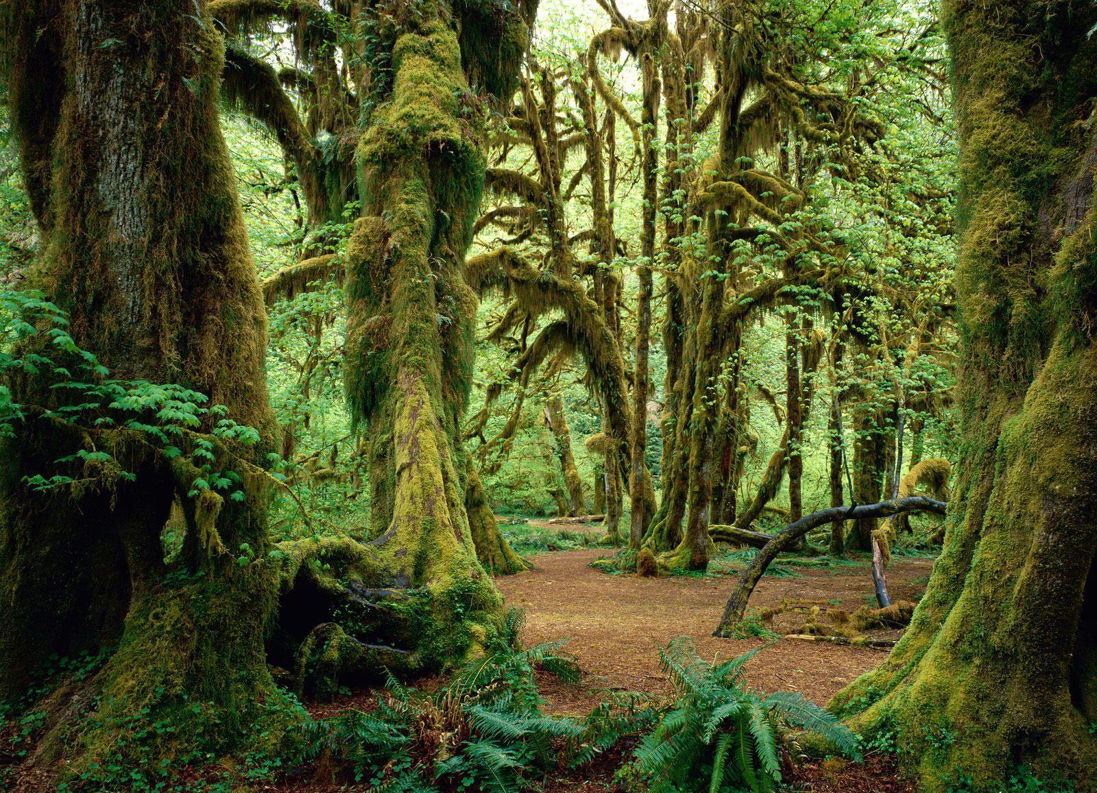 El misterioso bosque que parece respirar: el video es viral