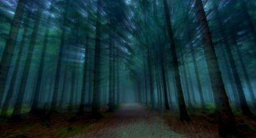 ¡Bosques que respiran! El viral que ha aterrorizado internet