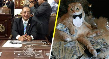 Diputado local de Morena propone que las mascotas puedan recibir herencia