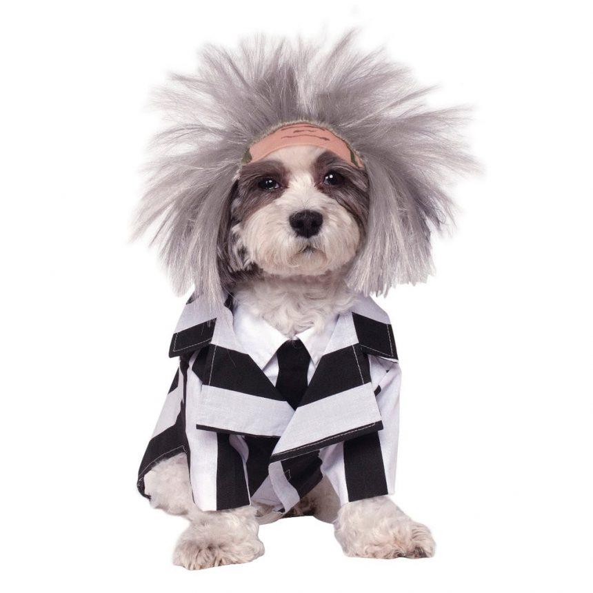 Heidi Klum da pistas de su disfraz de Halloween