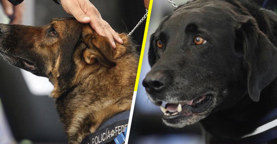 ¡Gracias por todo! 20 oficiales caninos se jubilaron de la Policía Federal