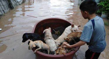 El niño que salvó a perritos y gallinas de la inundación en Nayarit