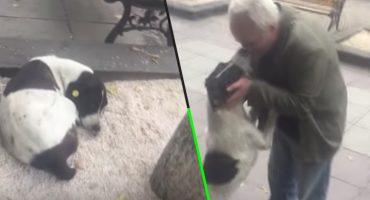 ¡Aww! Mira la reacción de este perrito al encontrar a su dueño luego de tres años