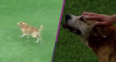 Perro interrumpió partido en Argentina y jugadores fueron a acariciarlo