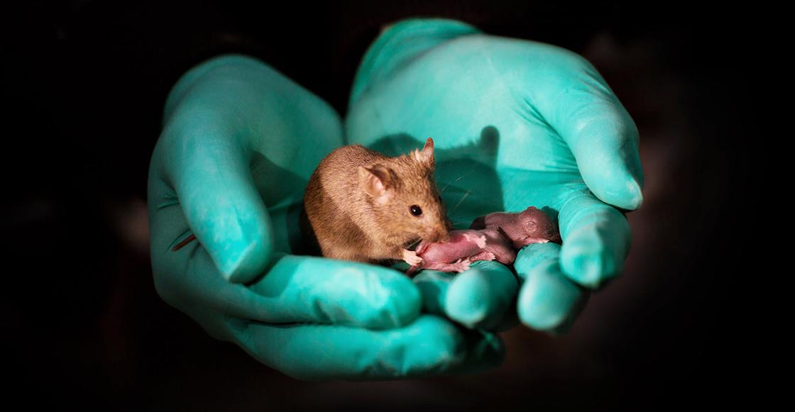 What?! Nace un ratoncito como producto de dos ratones del mismo sexo