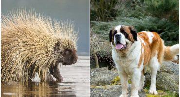 El perrito que aprendió a NUNCA morder un puercoespín