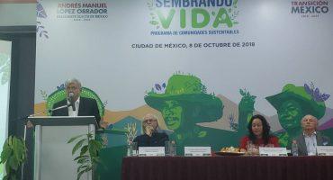 AMLO planea reforestar 1 millón de hectáreas en 19 estados
