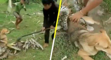 ¡Héroes! Niños se pelean con una serpiente para salvar a un perrito
