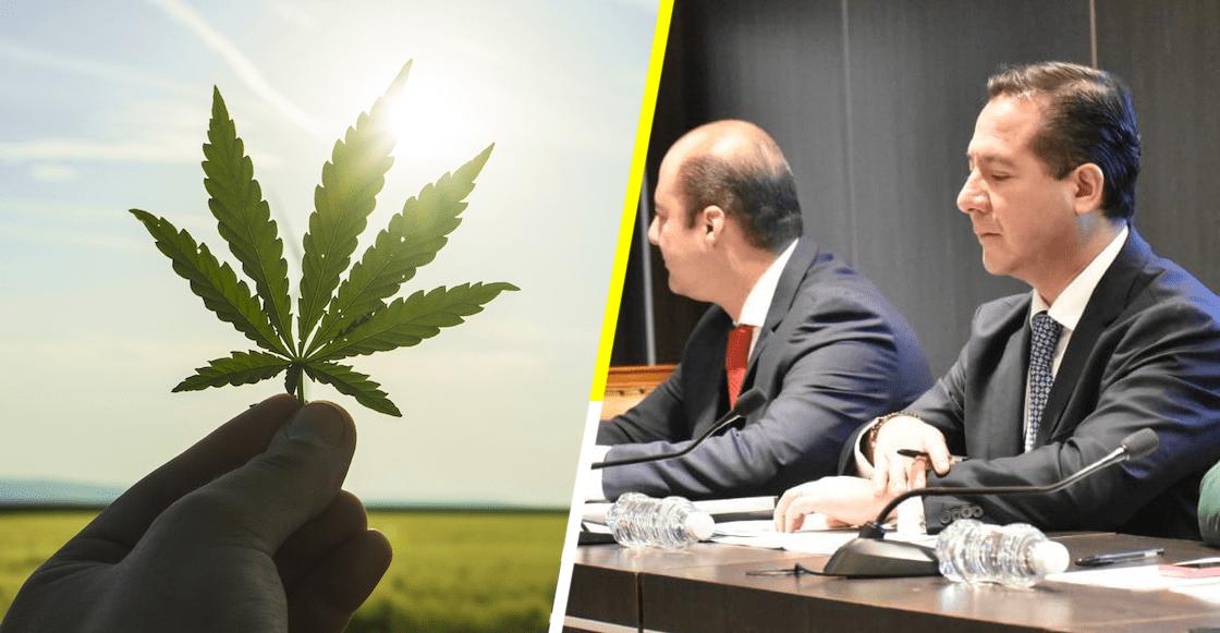 Un paso adelante: Cofepris libera productos con cannabis para su comercialización