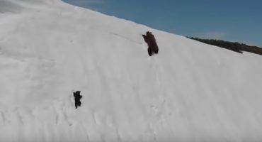 El video viral de este osito escalando una montaña no es lo que todos creen