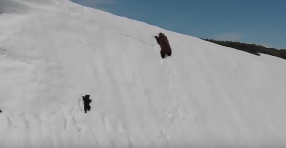 video-oso-escala-montana-viral