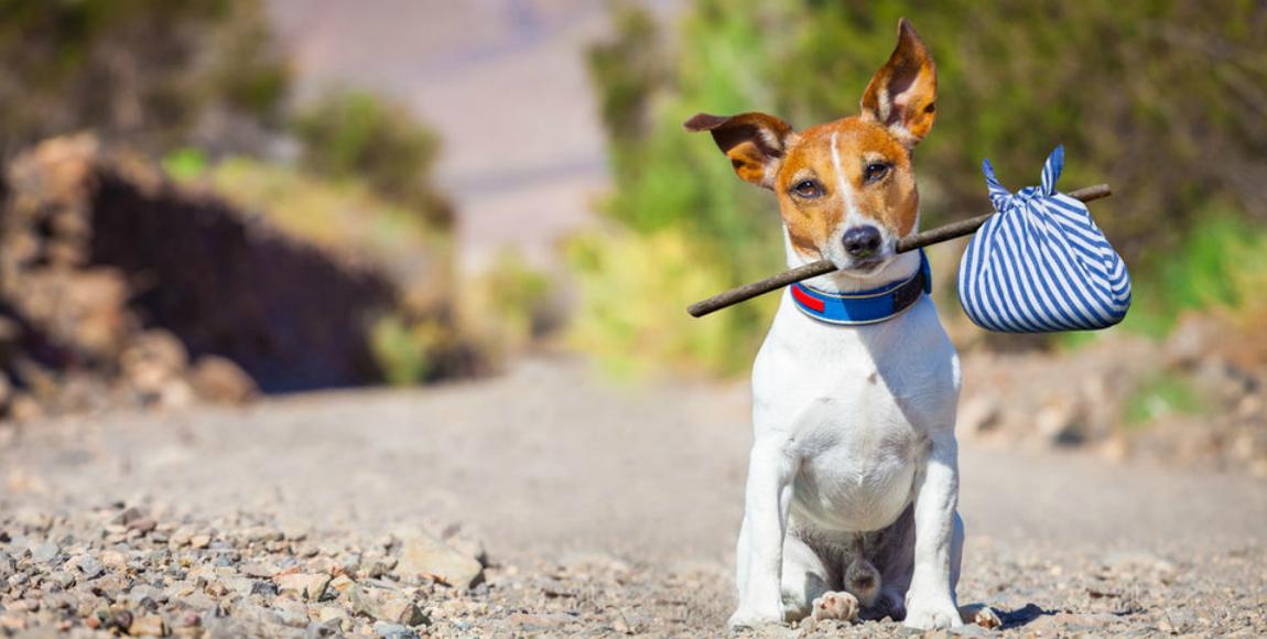 ¡Ah jijo! Suprema Corte determina constitucional el 16% de IVA sobre alimentos para mascotas