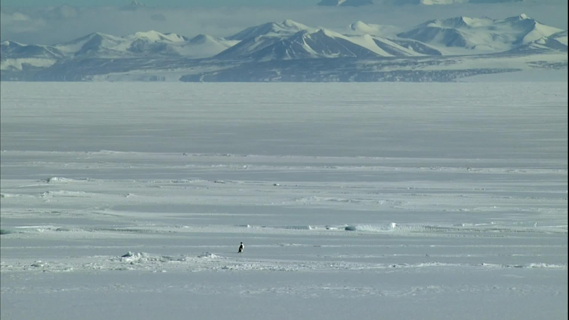 CuadroXCuadro: 'Encounters at the End of the World' y el pingüino suicida que todos tenemos dentro