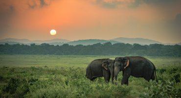 La India ahora tiene el primer hospital exclusivo para elefantes