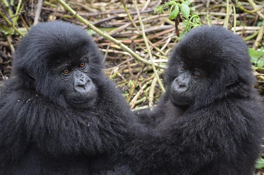 Oh-oh! La Lista Roja de especies en peligro de extinción, no es nada esperanzadora