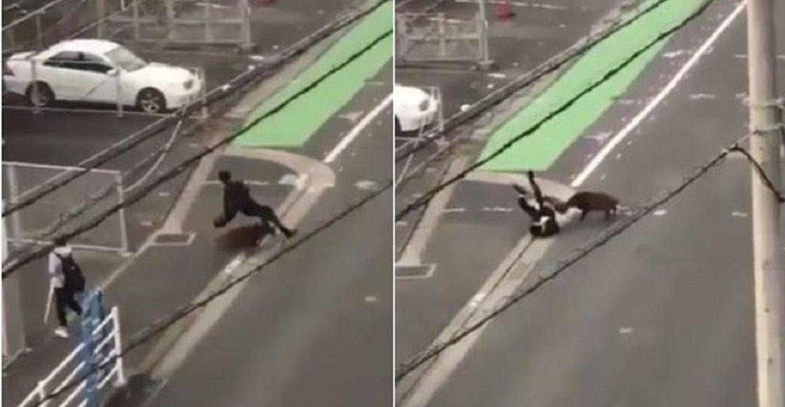 Jabalí ataca a un asalariado japonés