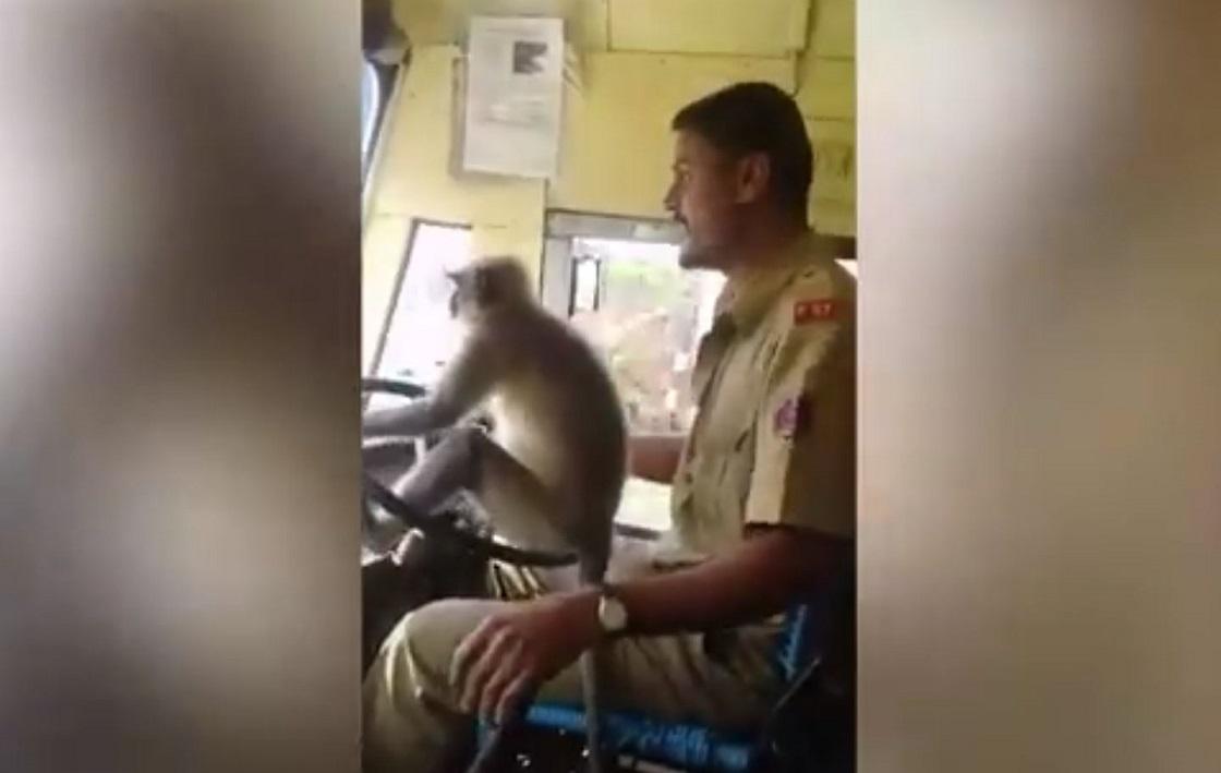 Mono que condujo un autobús en la India