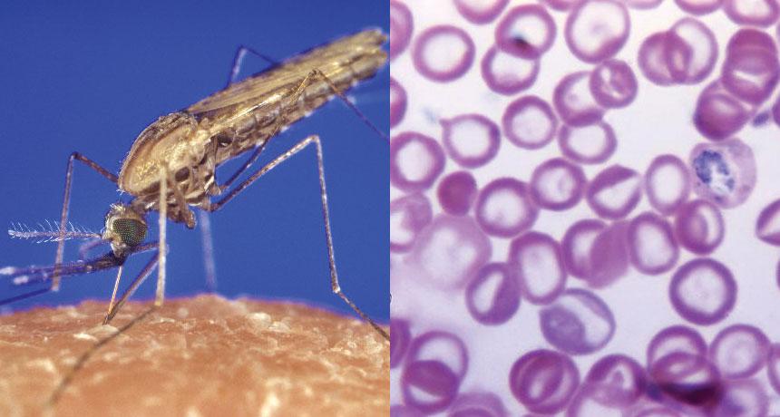 ¿Sospechas de malaria? Los perros pueden detectarla oliendo tu calcetín