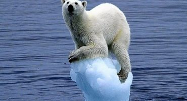 ¡Adiós Antártida! Bloquean la mayor reserva marina en el mundo 😟