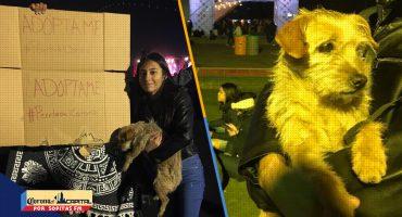 ¡Aww! Conoce la historia del perrito que fue adoptado en el Corona Capital 2018