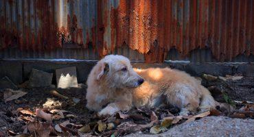 ¡Aplausos! Ya hay una ley para evitar que expongas a tu perrito a temperaturas extremas
