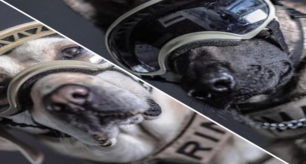 Galería: Frida y los héroes caninos del 19S, en la lente de Santiago Arau