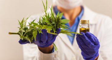 Tailandia se une al grupo de países que legaliza uso medicinal de la marihuana