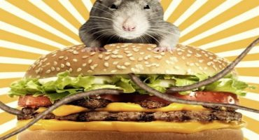 ¿Hamburguesa de rata? Teddy's Bigger Burgers cerró por una broma de sus empleados