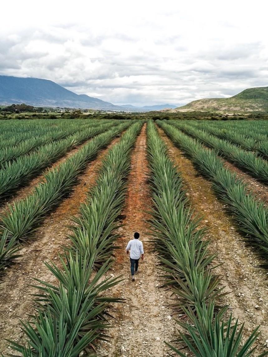 Santiago Matatlán es uno de los poblados más antiguos de Oaxaca.