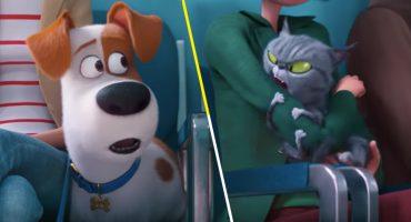 Primera vez en el veterinario: Mira el nuevo tráiler de La Vida Secreta de tus Mascotas 2