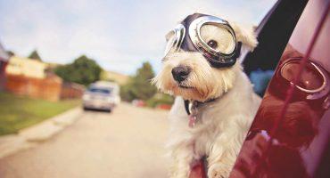 ¿Pensando en adoptar un perrito? Te decimos cómo hacerlo 🐶
