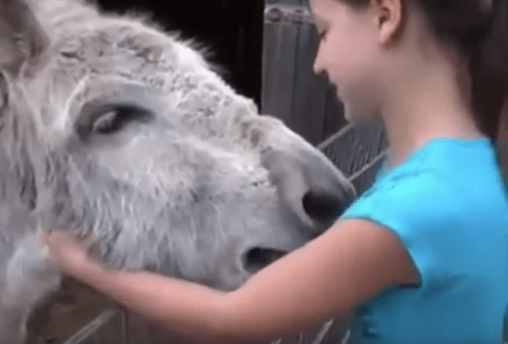 nina-burro-reencuentro-amor-video-viral