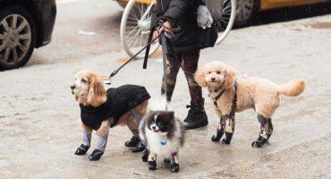 ¡Pero qué perridea tan más bonita! Ya hay leggings para los lomitos